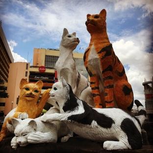 More cats status